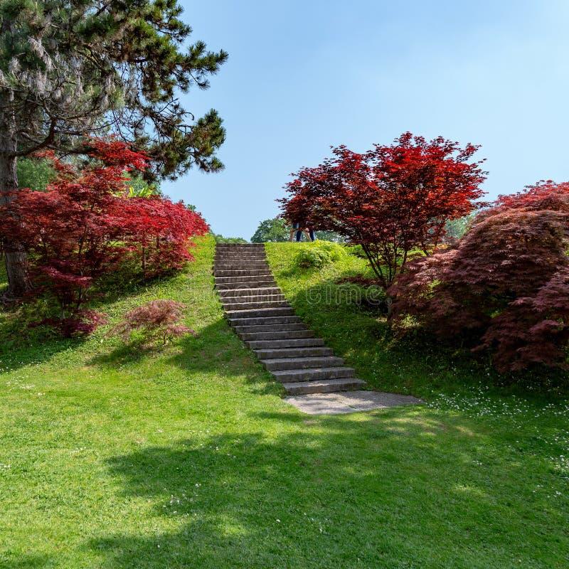 Escaleras del arce rojo imagen de archivo libre de regalías