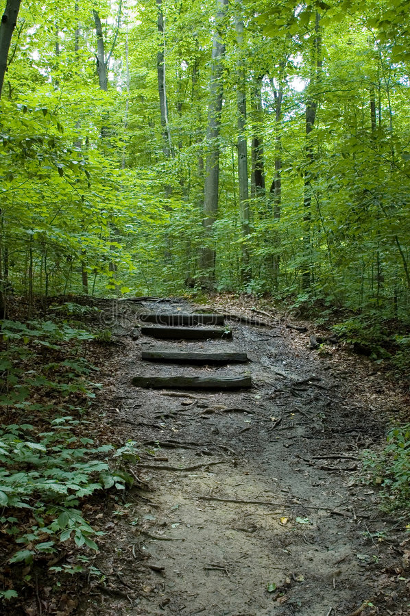 Escaleras del bosque imagen de archivo libre de regalías