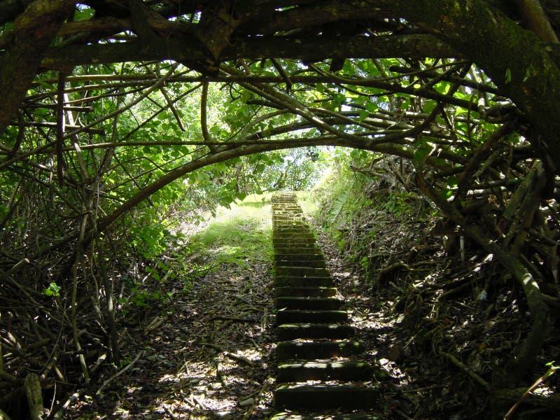 Escaleras del jardín imagen de archivo libre de regalías