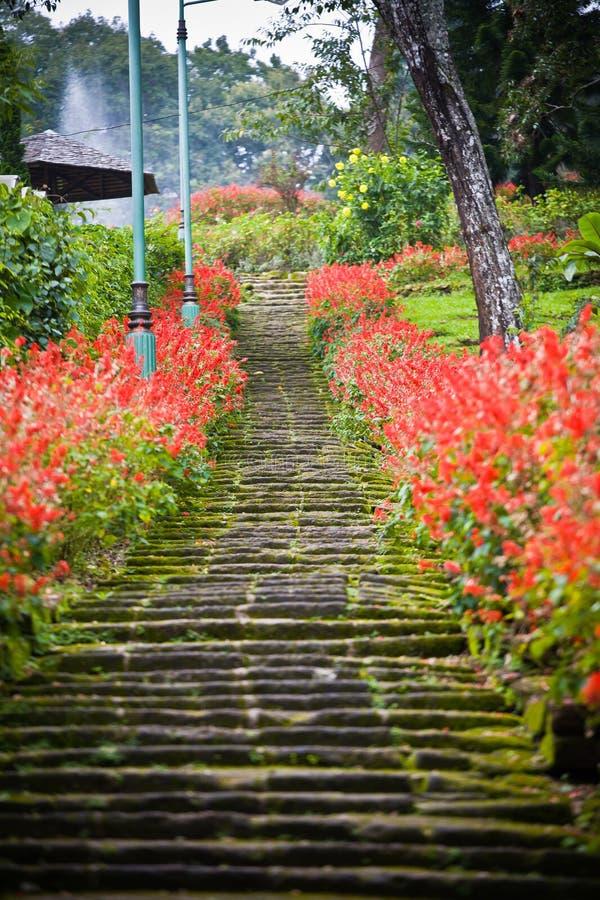 Escaleras del jardín con las flores imagen de archivo