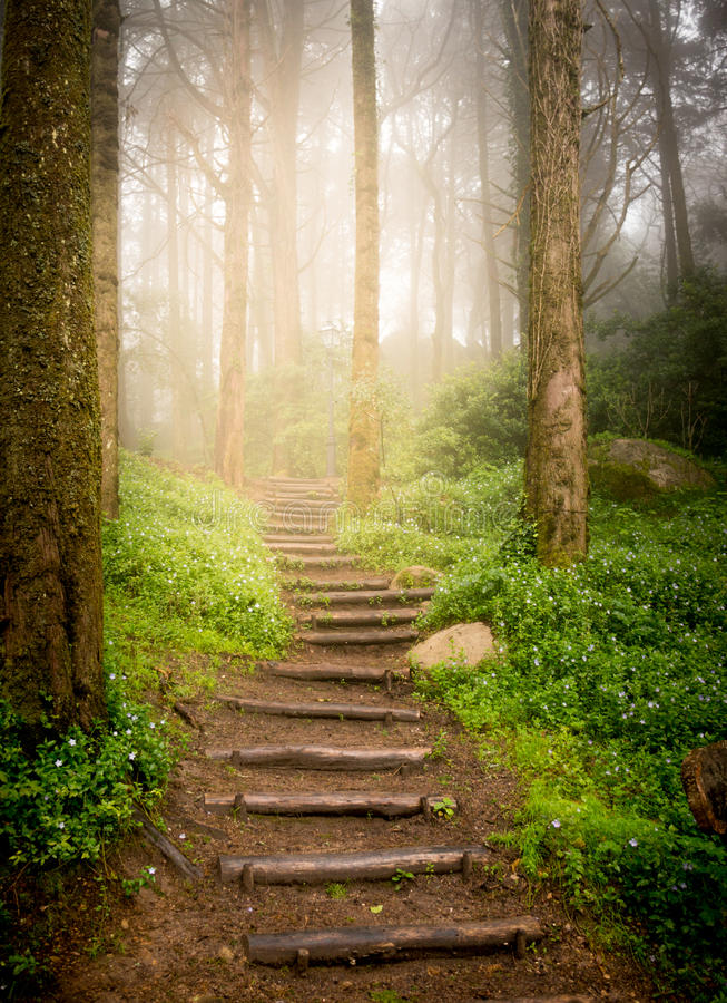 Escaleras en bosque foto de archivo