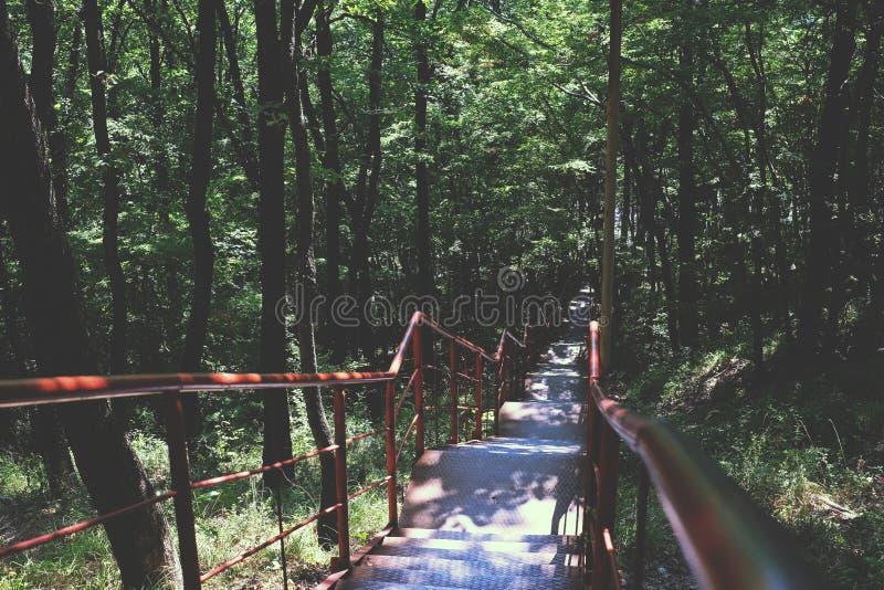 Escaleras en el bosque fotos de archivo