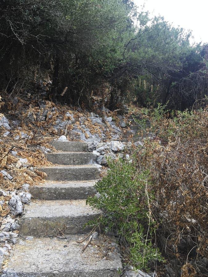 escaleras en la trayectoria de la selva al nowwehre fotos de archivo