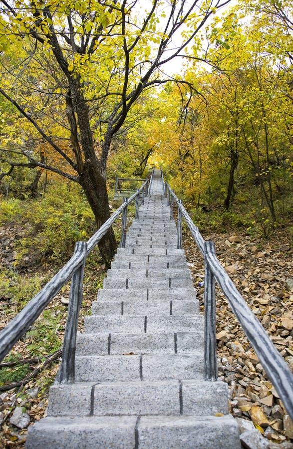 Escaleras en maderas fotos de archivo