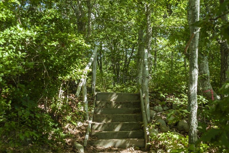Escaleras en maderas foto de archivo