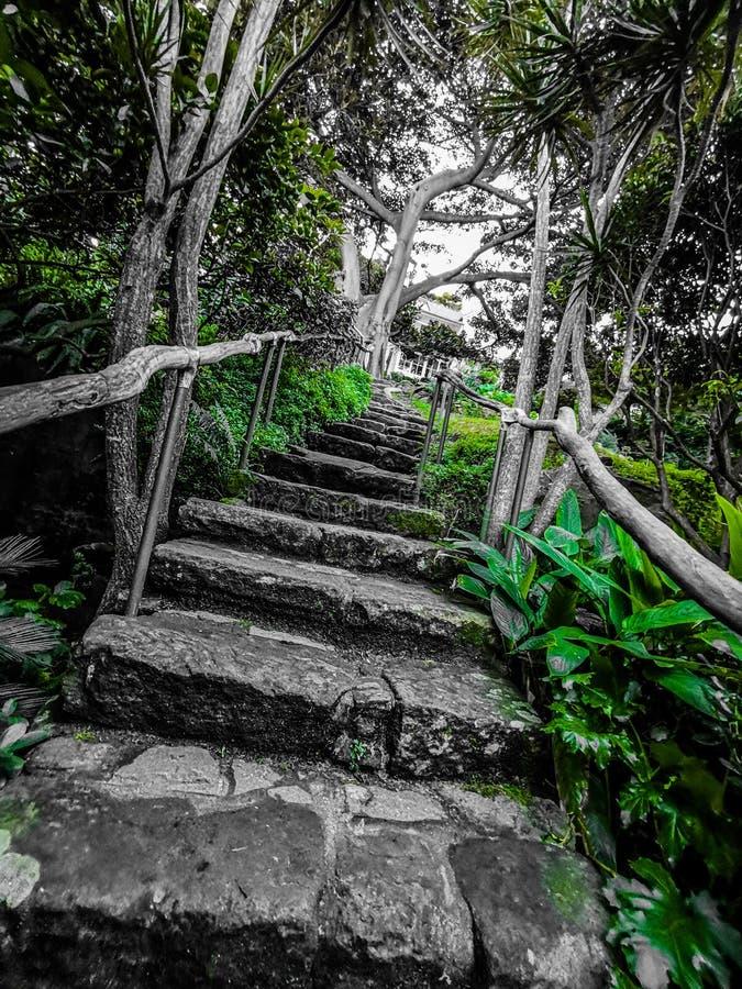 Escaleras filtradas del verdor foto de archivo