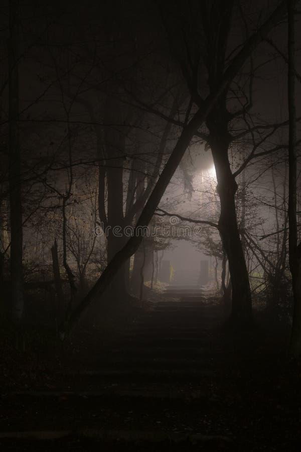 Escaleras pedregosas misteriosas en niebla densa en la noche en el bosque imágenes de archivo libres de regalías