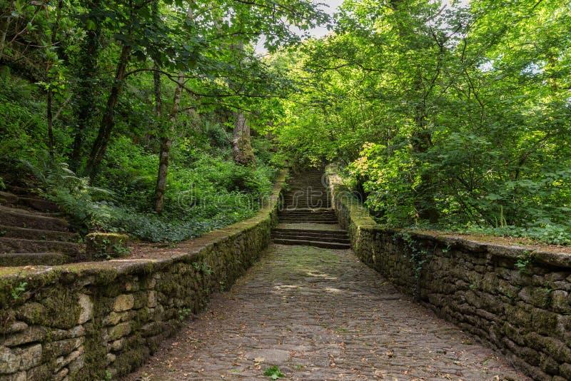 Escaleras que llevan para poner verde el bosque fotos de archivo