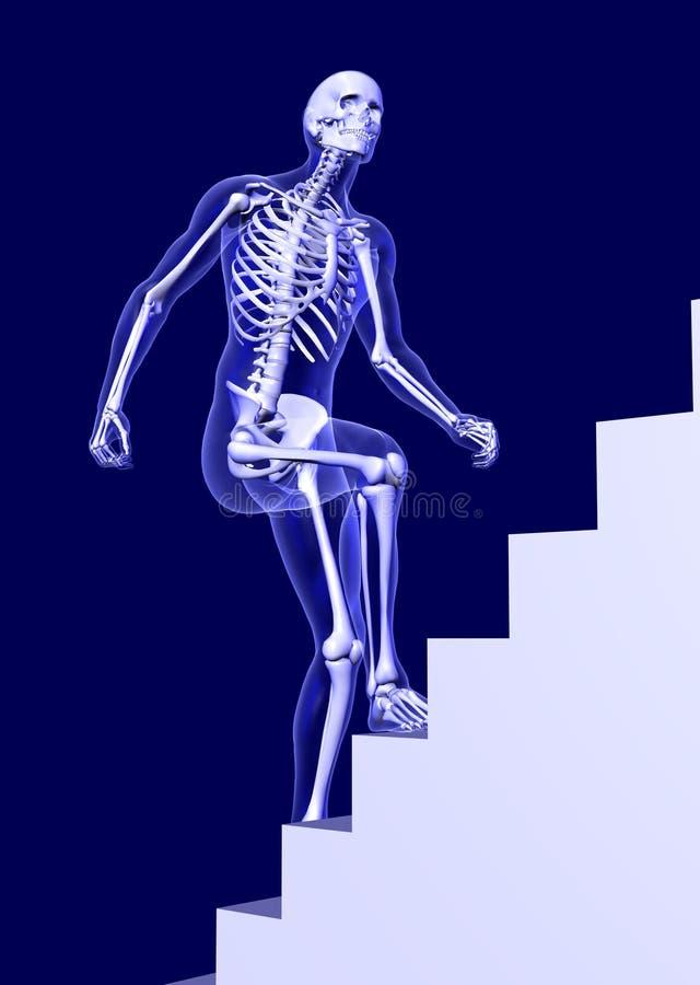 Escaleras Que Suben Del Hombre De La Radiografía Stock de ...