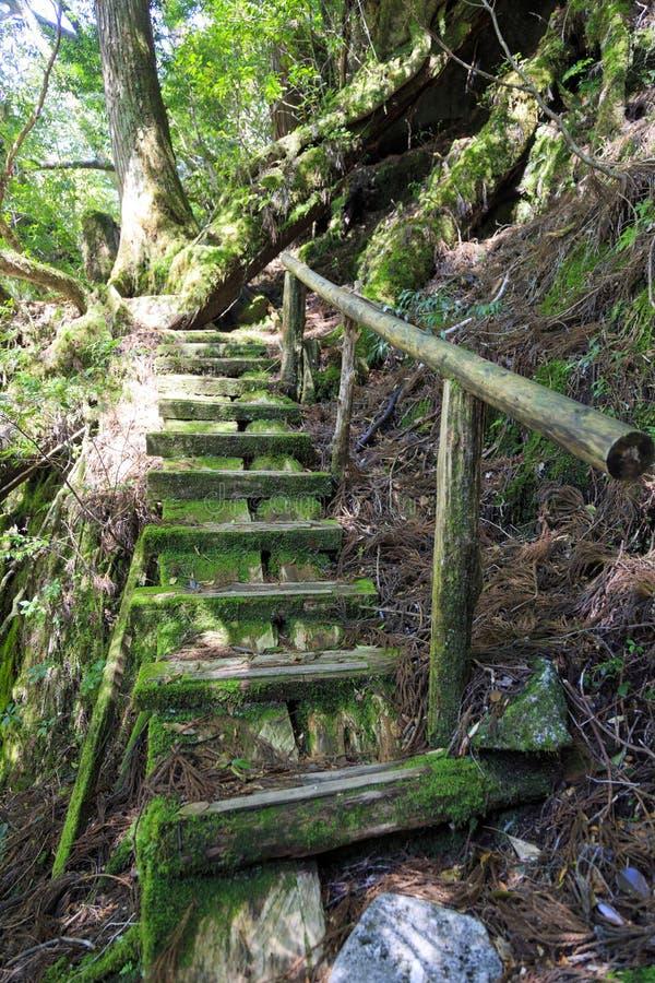 Escaleras viejas en bosque del musgo en la isla de Yakushima imagenes de archivo