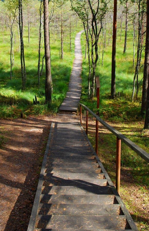 Escaleras y camino imagen de archivo