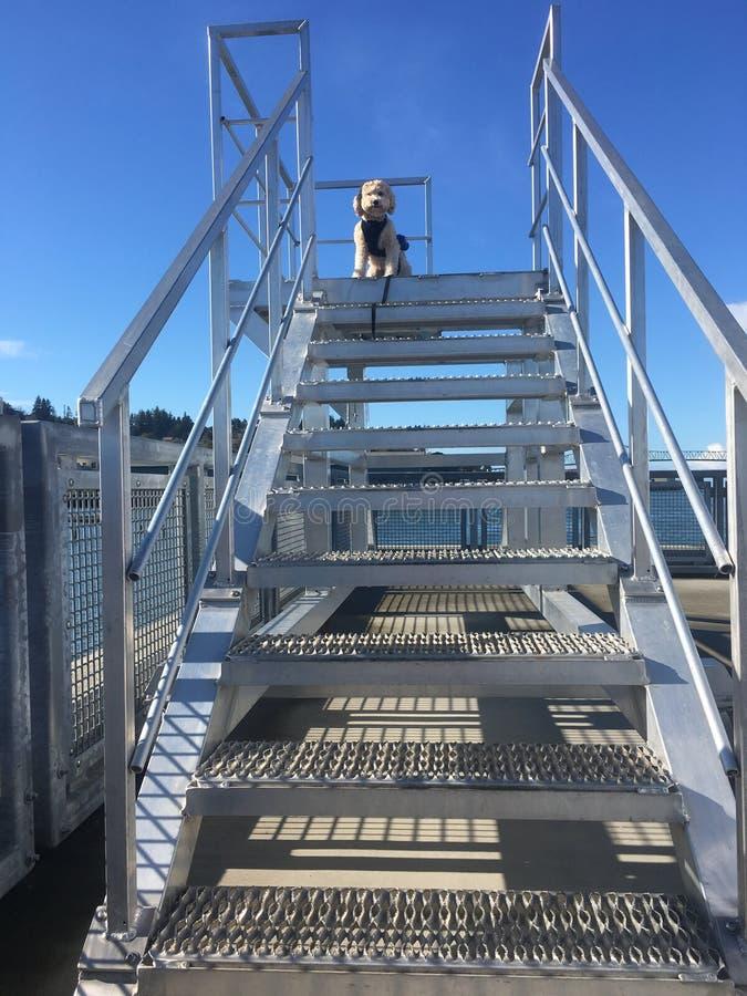 Escalier à Lola images libres de droits