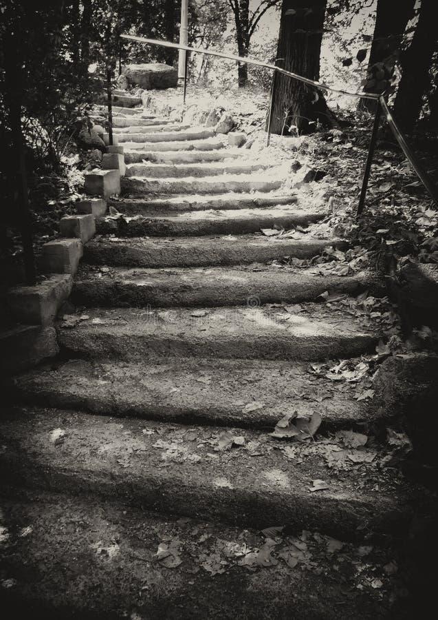 Escalier d'automne photo stock