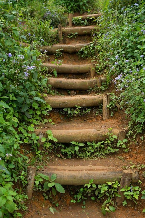 Escalier dans un bosquet photos stock