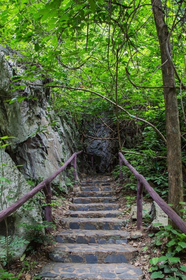 Escalier en pierre dans le forset photo libre de droits