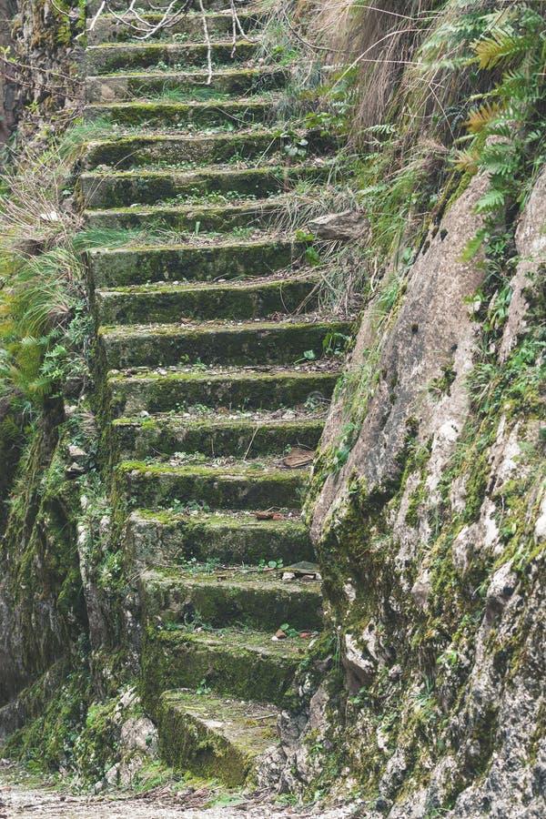 Escalier en pierre moite humide d'?chelle de mousse vieil dans le temple de for?t images stock