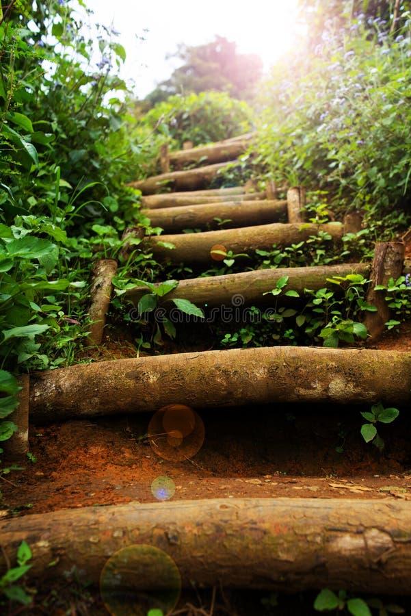 Escalier naturel image stock