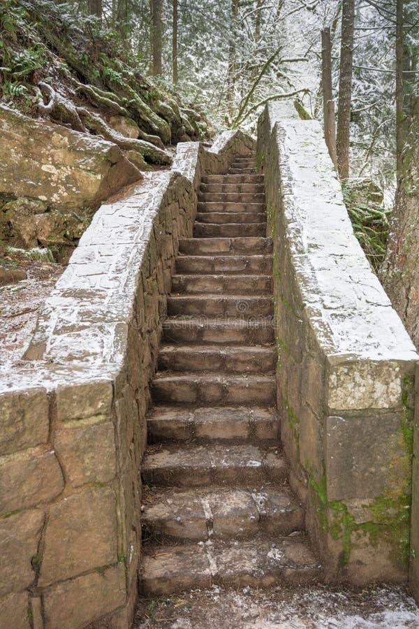 Escaliers étroits dans les bois photographie stock libre de droits