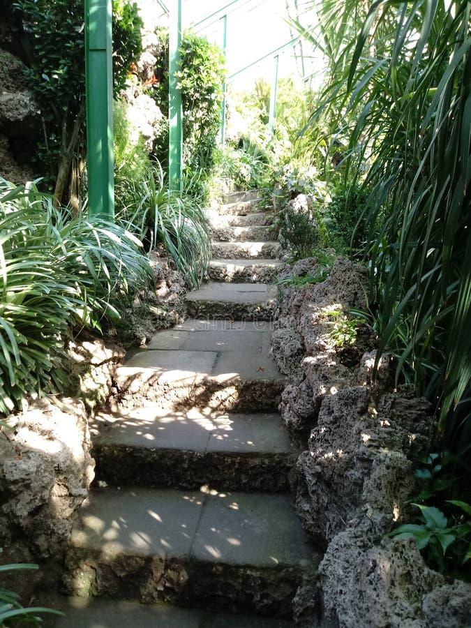 Escaliers antiques photos stock