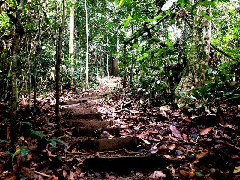 Escaliers au milieu de forêt image libre de droits