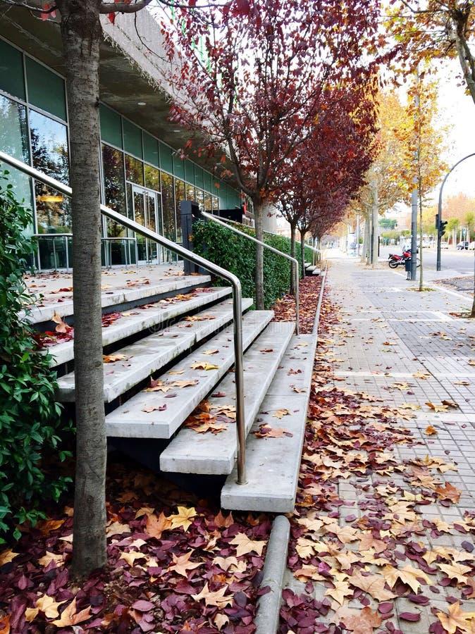 Escaliers avec des feuilles photo libre de droits