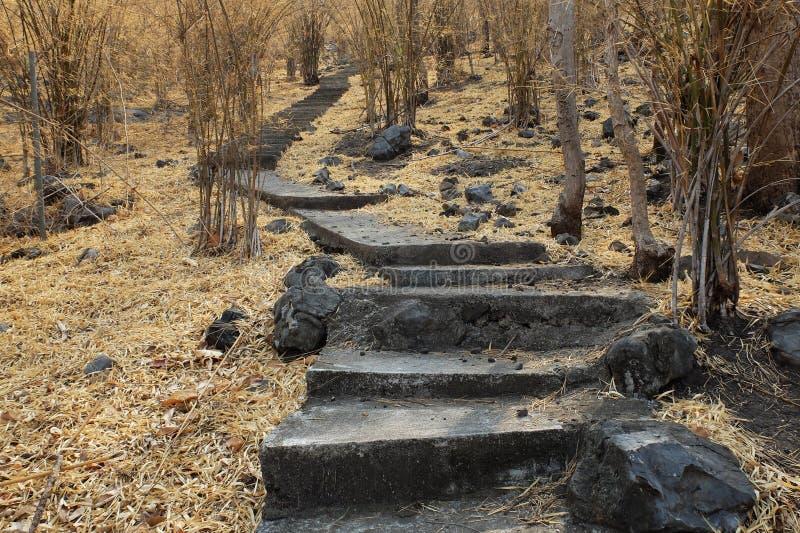 Escaliers dans la forêt en bambou sèche photo stock
