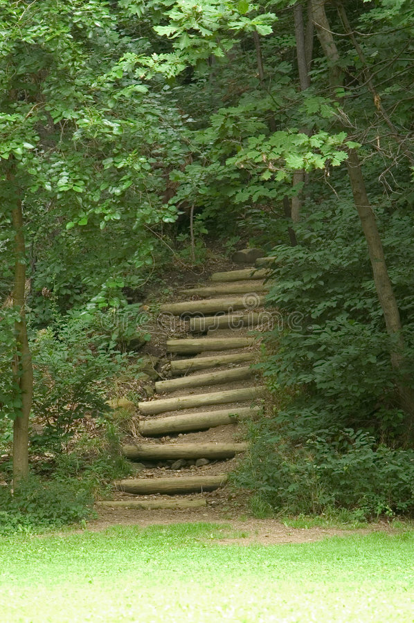 Escaliers Dans Les Bois Images libres de droits