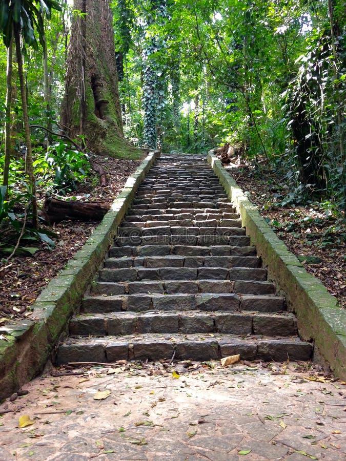 Escaliers dans les bois photo libre de droits