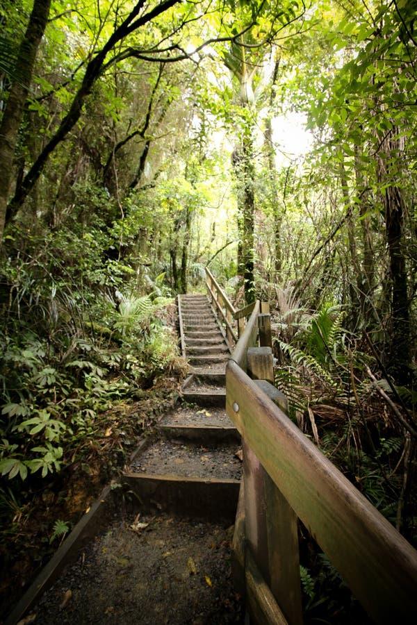 Escaliers dans les bois de la Nouvelle Zélande photographie stock libre de droits