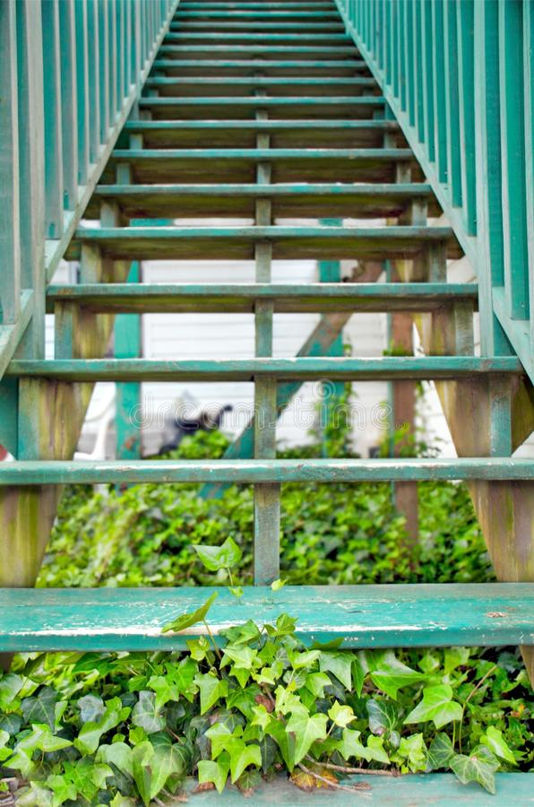 Escaliers de lierre images libres de droits