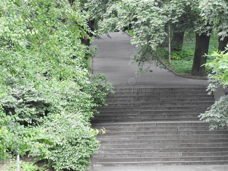 Escaliers de nature de for?t de vert de mur de pierres photos stock