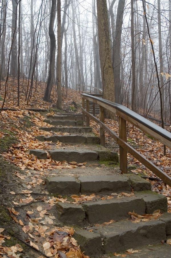 Escaliers de régfion boisée images libres de droits
