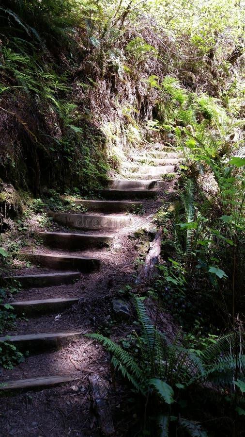 Escaliers de traînée images stock