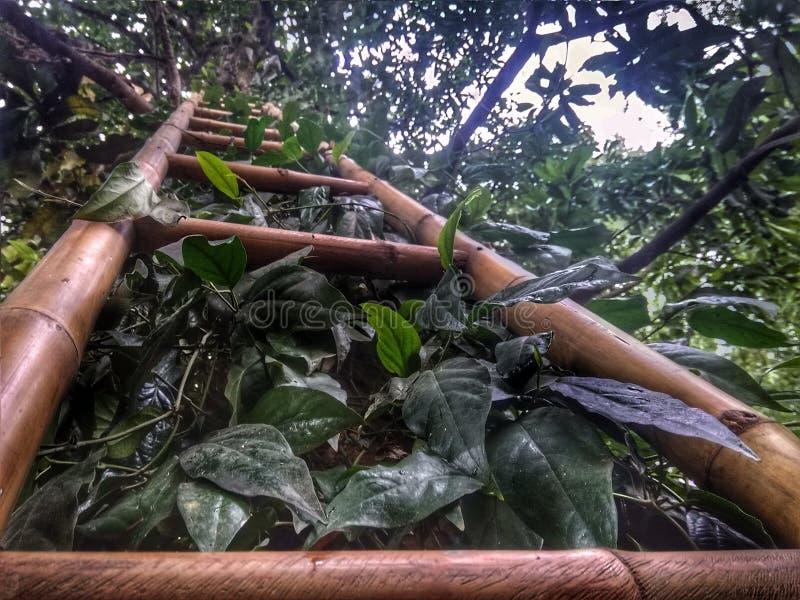 Escaliers en bambou image stock