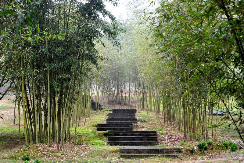 Escaliers en bambou d'arbre photographie stock libre de droits