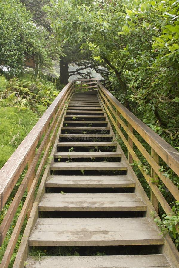 Escaliers en bois à la verticale de journal de hausse photo libre de droits