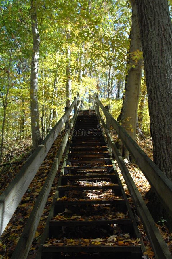 Escaliers en forêt photographie stock