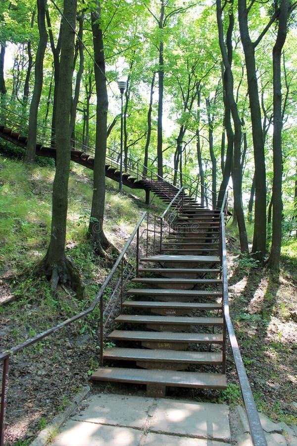 Escaliers en parc avec de grands arbres photographie stock libre de droits
