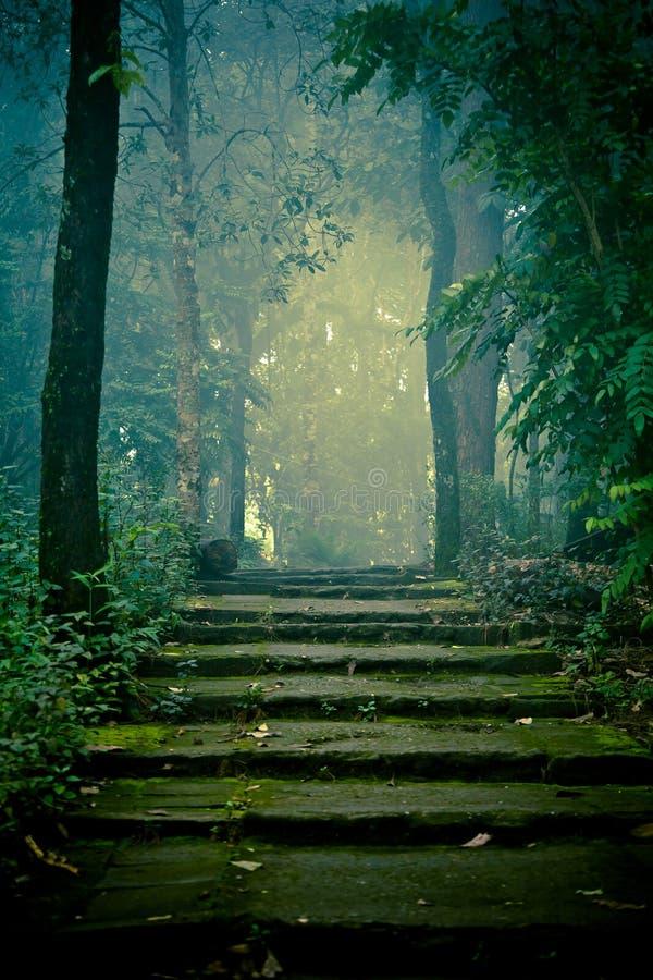 Escaliers en pierre dans la forêt photographie stock libre de droits