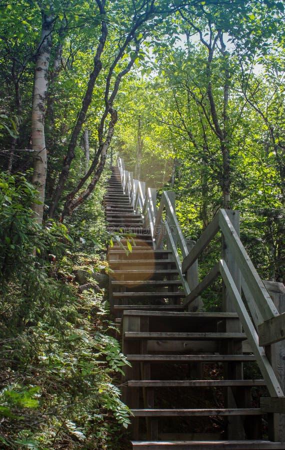 Escaliers entrant dans les bois image libre de droits