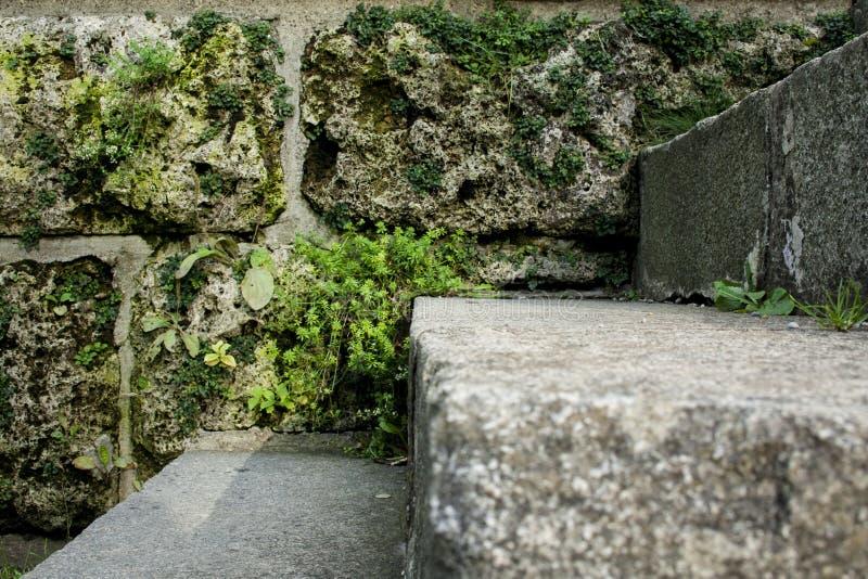 Escaliers envahis de pierre au printemps ou d'été images stock