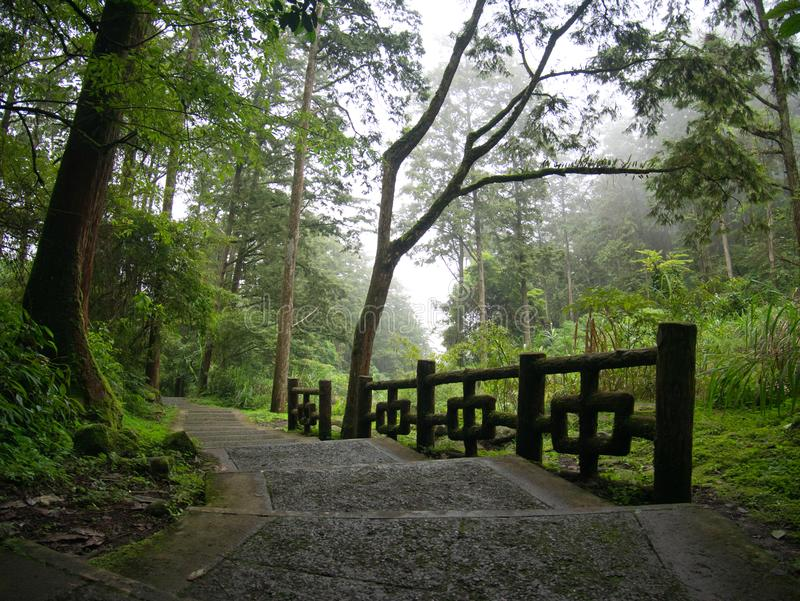Escaliers menant en bas de la colline dans une forêt brumeuse verte photographie stock
