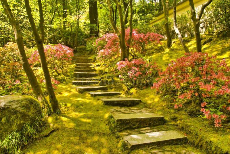 Escaliers rustiques photo libre de droits
