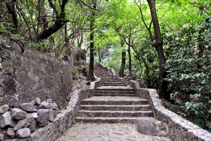 Escaliers sur la jungle photos libres de droits