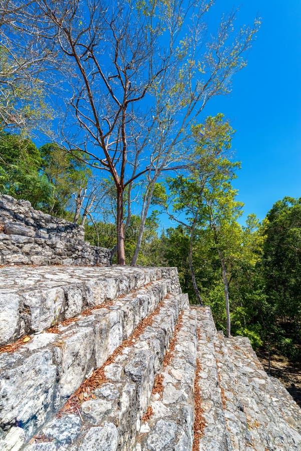Escaliers sur une pyramide maya photo libre de droits