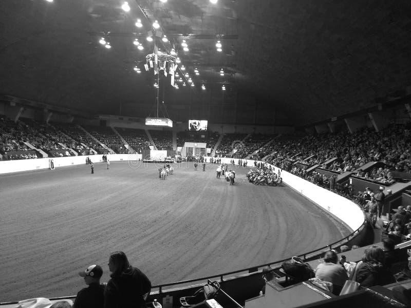 Escaparate justo del ganado 4-H del estado de Minnesota, Warner Coliseum, alturas del halcón, manganeso LOS E.E.U.U. fotografía de archivo libre de regalías