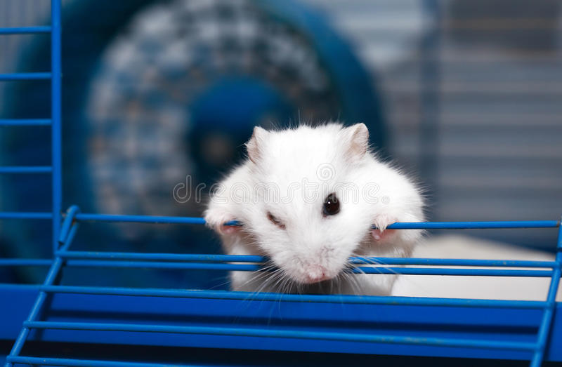Escape From Cage stock photography