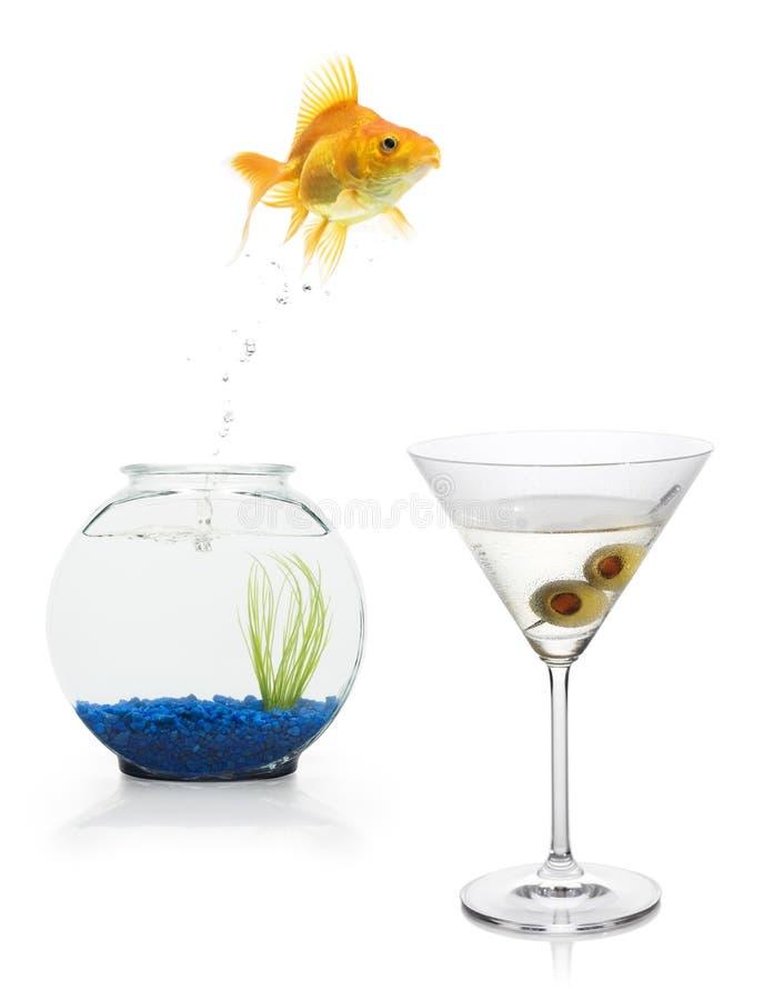 Escape del Goldfish fotografía de archivo libre de regalías