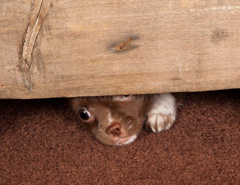 Escape del perrito imágenes de archivo libres de regalías