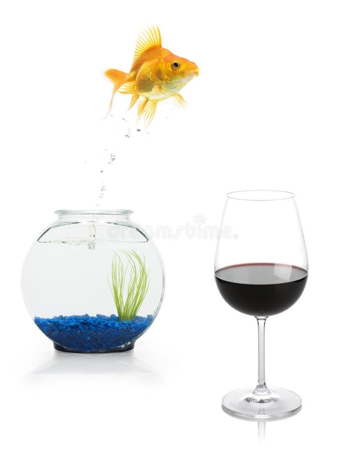 Escape do Goldfish fotografia de stock